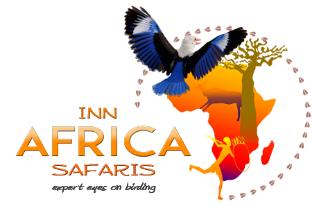 Inn Africa Safaris
